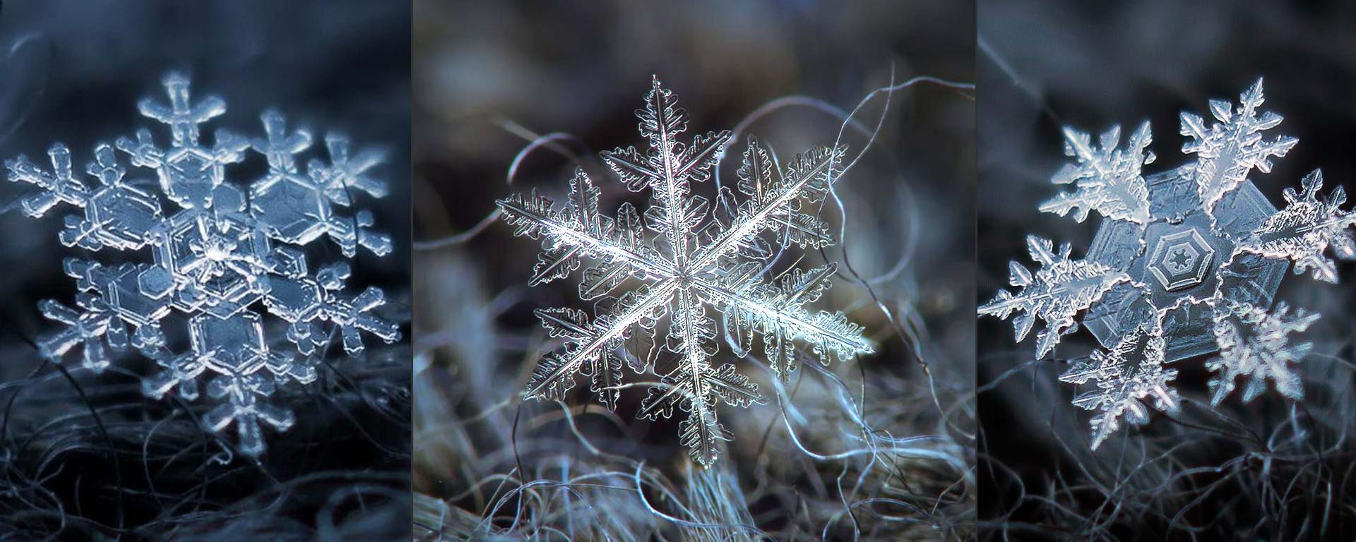 Featured Natural Beauty of Snowflakes